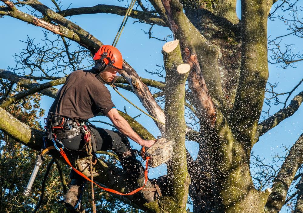 Elagage arbre frejus var