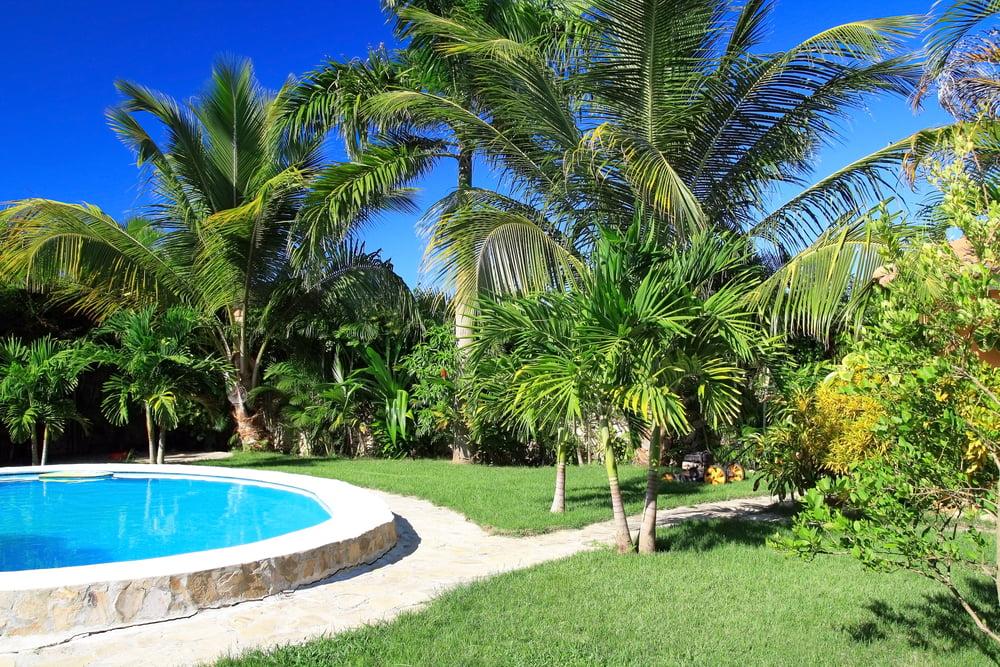 Taille de palmier sur le Var